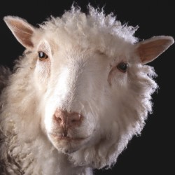 Towards Dolly: A Century of Animal Genetics in Edinburgh 4****