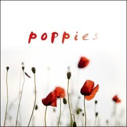 Poppies – 5 stars *****